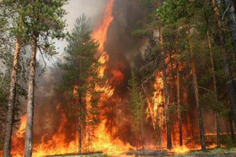 У Київській області горить 19 гектарів хвойного лісу