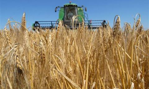 Новий Податковий кодекс може знищити аграрне виробництво