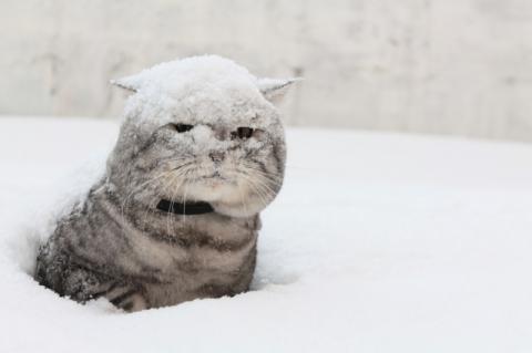 На Україну насуваються сніг та морози