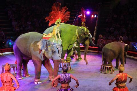 Польські міста відмовляються приймати в себе цирки з тваринами