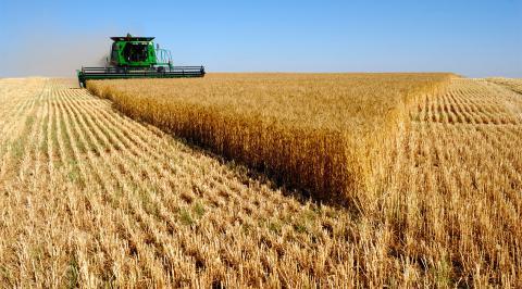 В Європі бояться українських аграріїв