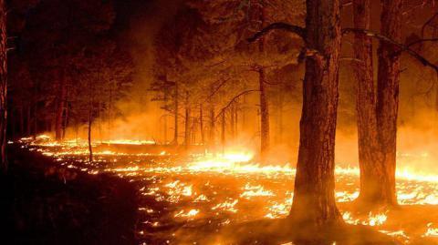 Кількість лісових пожеж в Україні зростає