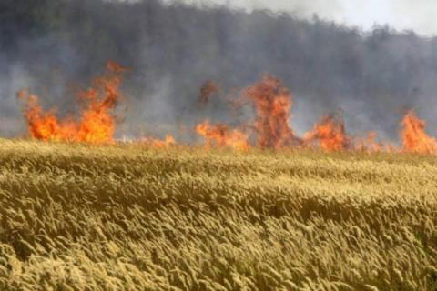 В Одеській області згоріли понад 7 гектарів полів