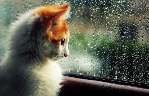 Завтра у Києві очікується різка зміна погодних умов