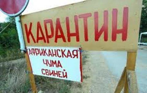 Випадки АЧС зафіксовано в Одеській і Кіровоградській областях