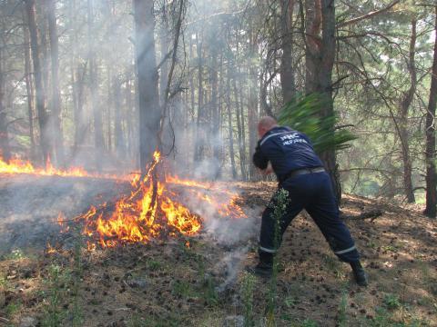 Рятувальники ліквідували майже сотню пожеж в екосистемах