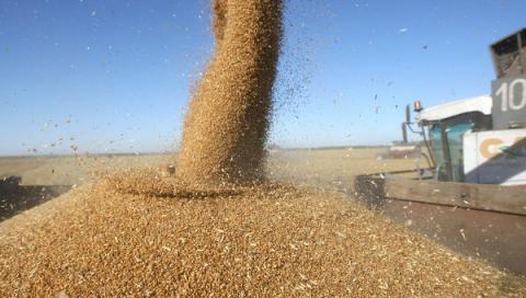 Експорт зернових культур в Україні перевищив 3 млрд доларів