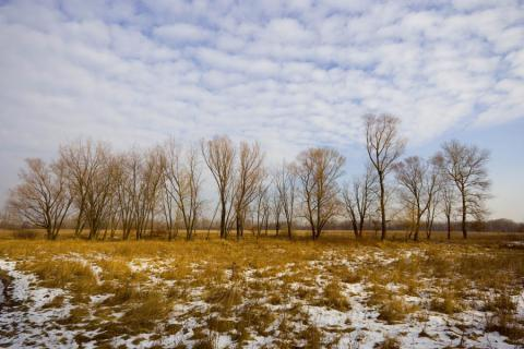 Укргідрометцентр прогнозує аномально теплу зиму