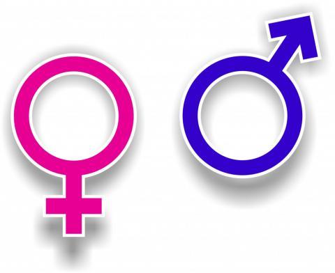 Посаду урядового уповноваженого з гендерної рівності запровадять в Україні