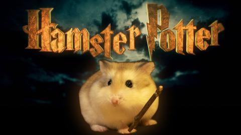 Хом'яка зняли в образі Гаррі Поттера (ВІДЕО)
