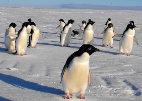 Найбільшу морську заповідну зону створять в Антарктичному океані