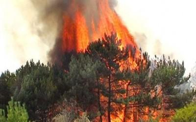 Більш як третина заповідників на Донбасі згоріли