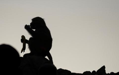 У Лівії сталася сутичка між двома ворогуючими племенами. Причиною зіткнень стала мавпа