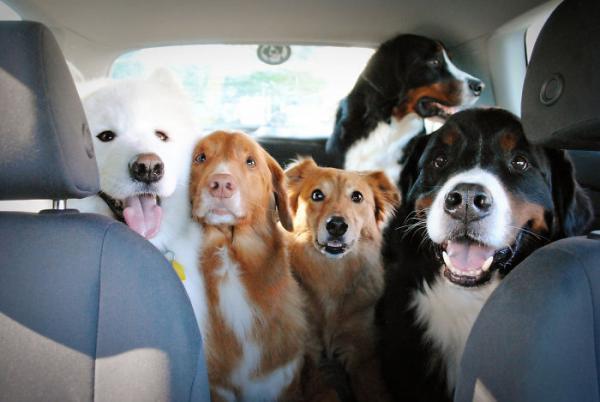 На що схоже життя, коли в будинку більше двох собак (ФОТО)