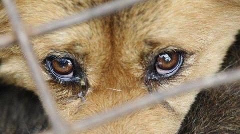 В Україні можуть ввести кримінальну відповідальність за знущання над тваринами