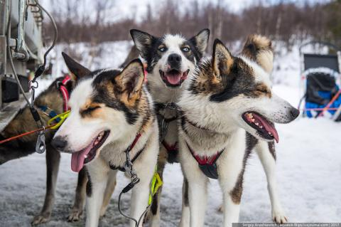 Як виглядає собачий громадський транспорт в Норвегії (ФОТО)
