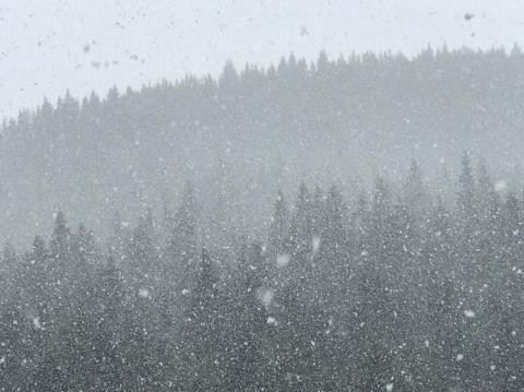 У Прикарпатті випав сніг (ФОТО)