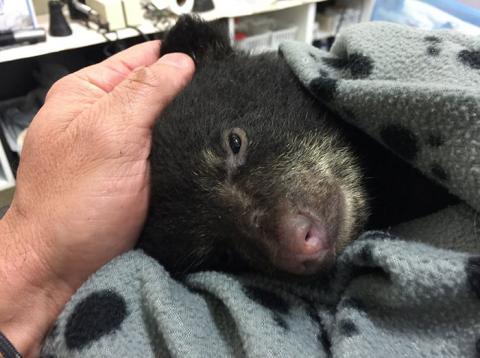Фотограф врятував вмираючого ведмедика, ризикуючи потрапити за це в тюрму (ФОТО)