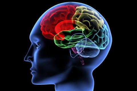 """Вчені відкрили """"центр чесності"""" в мозку і навчилися ним управляти"""