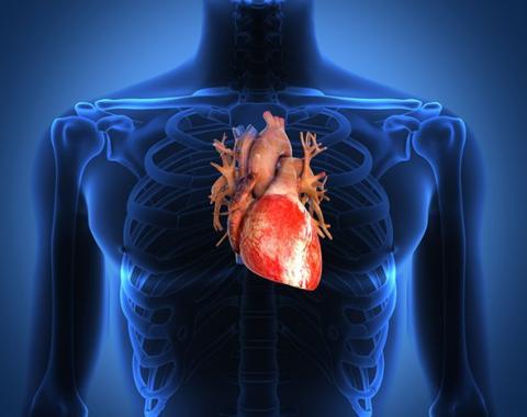 """Вчені знайшли вбудований """"дефібрилятор"""" в серці людини"""