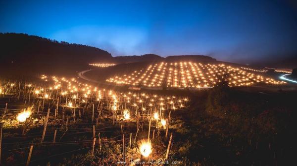Битва льоду і полум'я: як французи рятують свої виноградники (ФОТО)