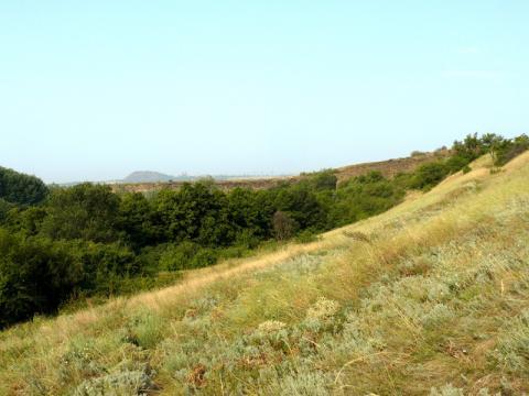 Бойовики цинічно знищують пам'ятки природи на окупованих територіях (ФОТО)