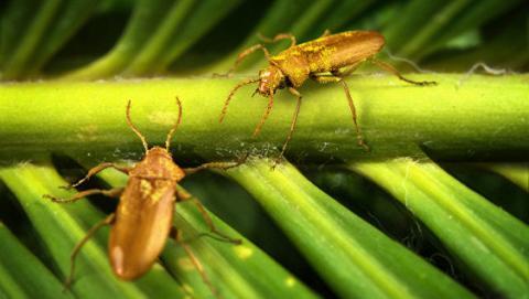 Дослідження імунітету комах допоможе створити нові антибіотики