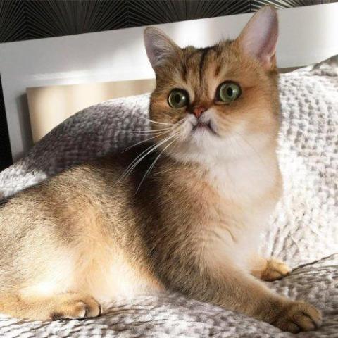 Кумедні фото здивованих тварин, які змусять вас посміхатися (ФОТО)