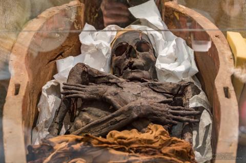 У Києві показали моторошні давньоєгипетські мумії (ФОТО)