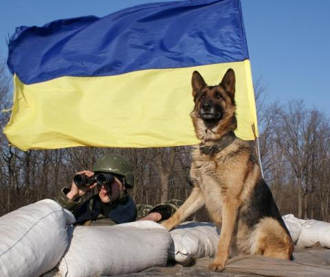 Прикордонники запобігли переміщенню наркотиків в окупований Крим