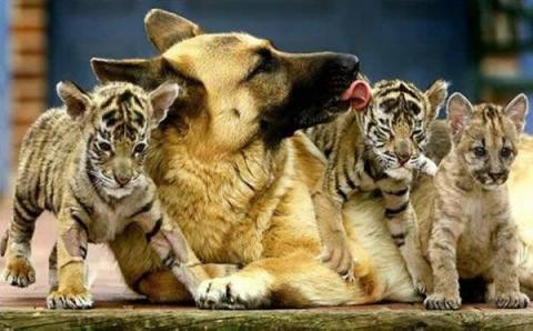 Неймовірні фото: як проявляється дружба у тварин (ФОТО)
