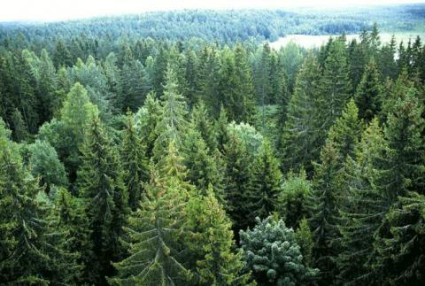 На Землі виявлено раніше невідомі ліси