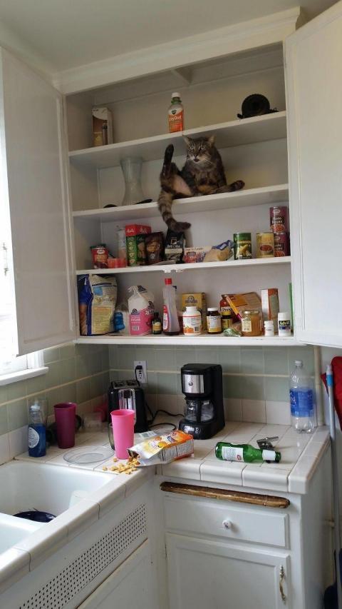 Неймовірні фото тварин, які створили повний хаос в будинку (ФОТО)