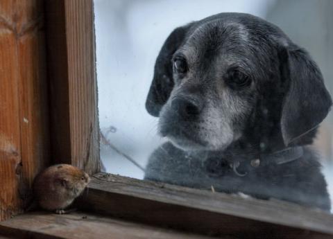 Чарівні фото занедбаних будинків, зайнятих дикими тваринами (ФОТО)