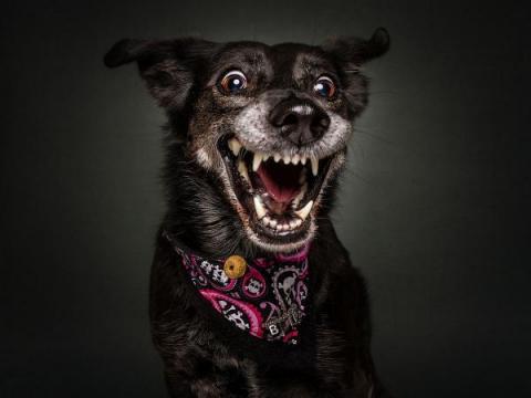 Фотограф зробив кумедні фото міміки собак (ФОТО)