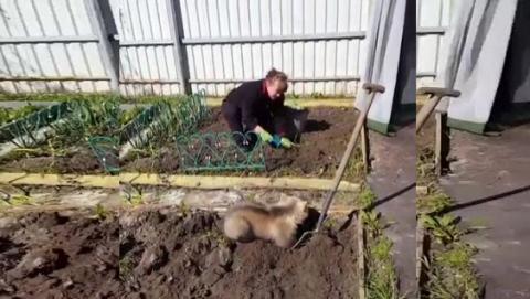 Ведмедик, що допомагає садити картоплю, розчулив користувачів мережі