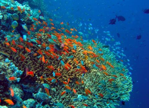 Російські вчені зафіксували загибель рифів Мальдівського архіпелагу