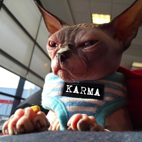 Найстрашніший кіт став зіркою інтернету (ФОТО)