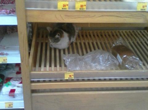 Користувачі соцмережі знайшли «хлібного» кота, який «чекає на акційні булки»