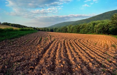 Експерт розповіла, що селяни не мають грошей, щоб придбати землю