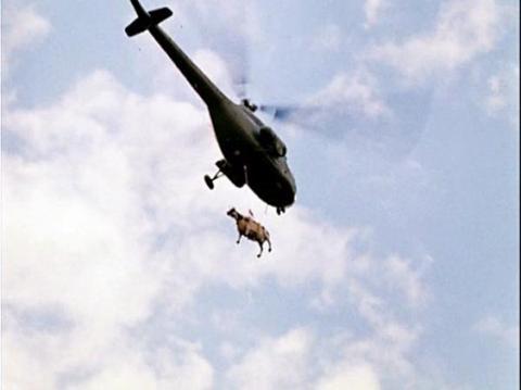 Бізнесмен з Катару планує доставити на літаках 4 тисячі корів в країну