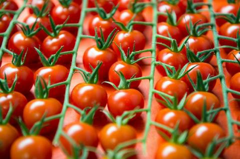 Складено рейтинг найкориснішої у світі їжі