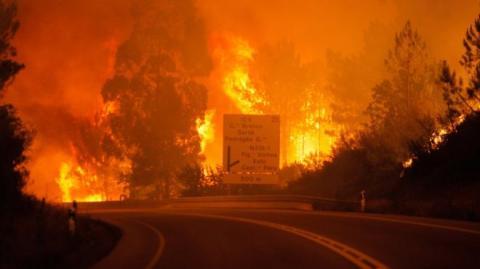 Лісові пожежі у Португалії: десятки загиблих
