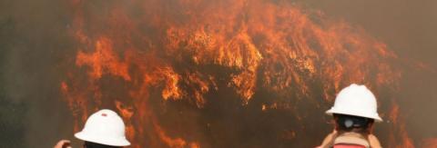Десятки загиблих: у Португалії сталася масштабна пожежа