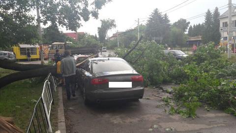 Наслідки шквальної бурі у Львові: з'явились фото (ФОТО)