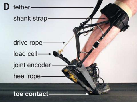Інженери адаптували екзоскелет під рух людини