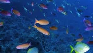 Під Ла-Маншем можна буде побачити підводний світ за допомогою VR-технологій (ВІДЕО)