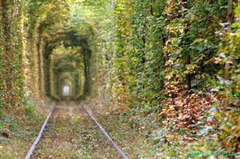 Романтичний Тунель кохання у Клевані: Лісова дорога у казку (ФОТО)