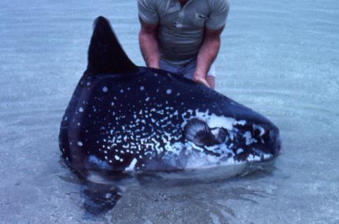 Зоологи виявили новий вид риб (ФОТО)
