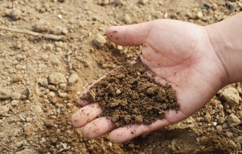 Знайдено спосіб підвищення врожайності глинистих ґрунтів
